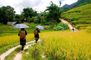 Excursion Sapa – Lao Chai et Ta Van en une journée.