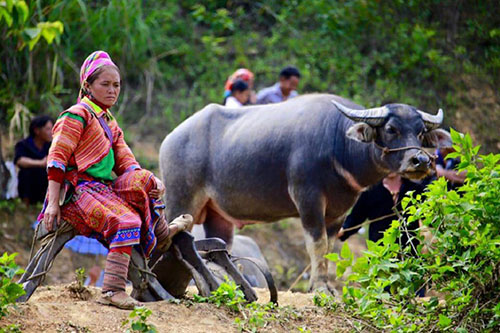 Bac Ha | Asia Hero Travel | Vietnam